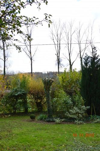 plectanthrus,taille avec fabien albizia,automne 097.JPG