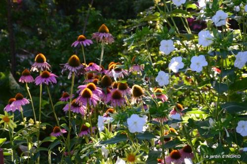 jardin ,bord de la Dordogne,cygnes 038.JPG