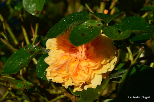 automne jardin,la rue,abeilles,les p filles 028.JPG