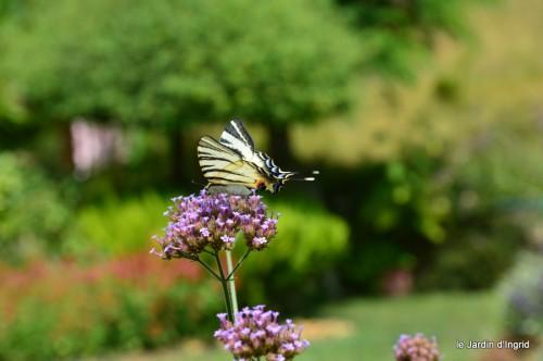 datura,papillon,Meyrals,déco Bergerac,bignonia 041.JPG