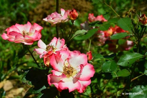 le jardin de Frescati,roses 096.JPG