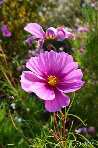 jardin Mme Perichou,grandes fleurs,bouquet,jardin 015.JPG