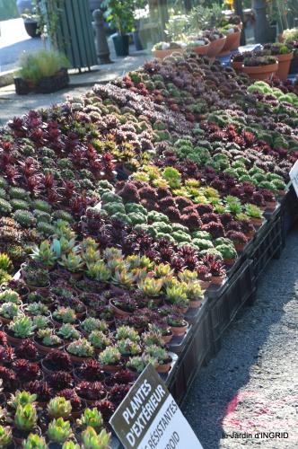 coquelicots,fête des fleurs Lalinde,fouleix,jardinage 042.JPG