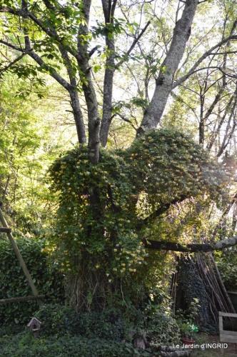 jardin,portes ouvertes,Julie 009.JPG