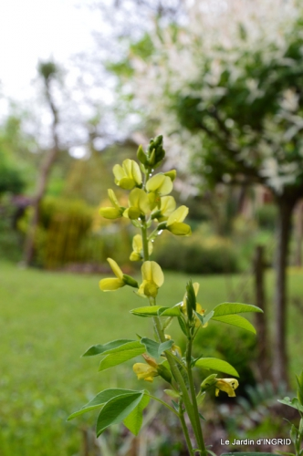 jardin avril 007.JPG