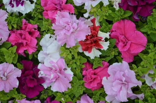 CADOUIN,cascade,iris,roses,fl.sauvages 063.JPG
