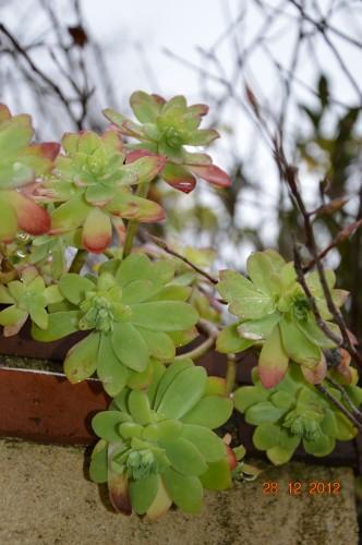 mésanges, nid frelons,fleurs décembre 122.JPG