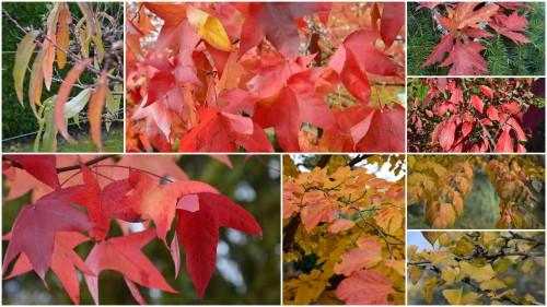 2012-10-28 octobrejardin,citrouillesIssegeac,leCLOSdesSOURCES.jpg