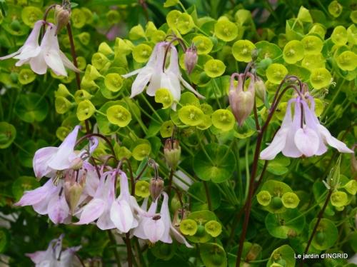 fleurs du jardin 016.JPG