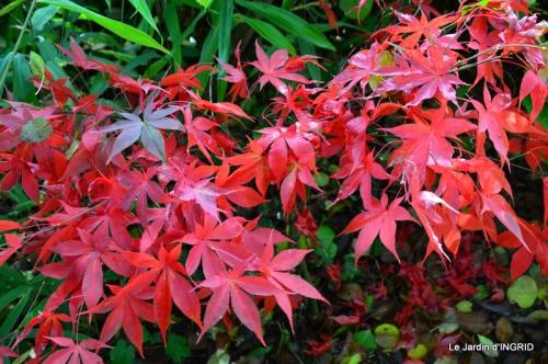 les arbres en automne,cabane 086.JPG