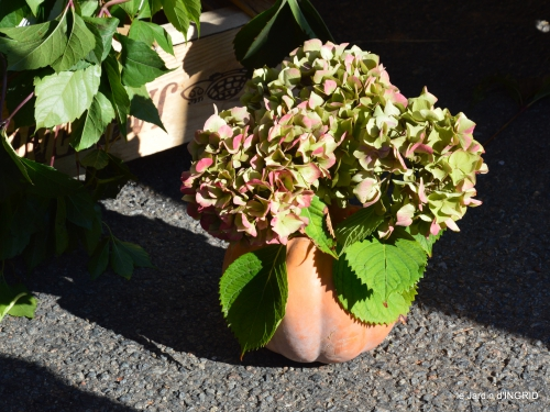 st Mayne de Peyrerol,bouquet rose,sauges 063.JPG