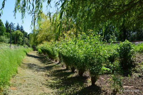 chez Fabien,le canal,jardin,hémérocalles,le souci,potager 166.JPG