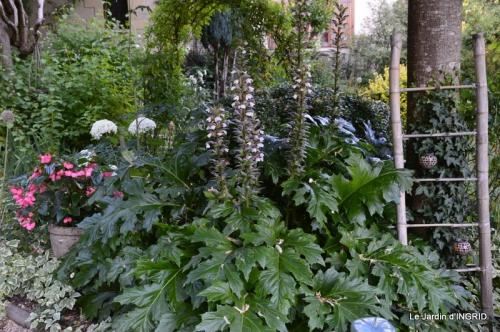 albizia,bouquet,plantes  en A 056.JPG
