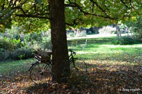 sauges,plectanthrus,Romane,canal,manthe r.,automne 144.JPG