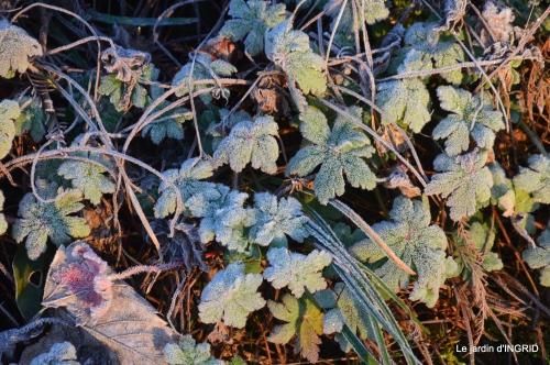 première gelée,compositions florales à garder,jardin 034-001.JPG