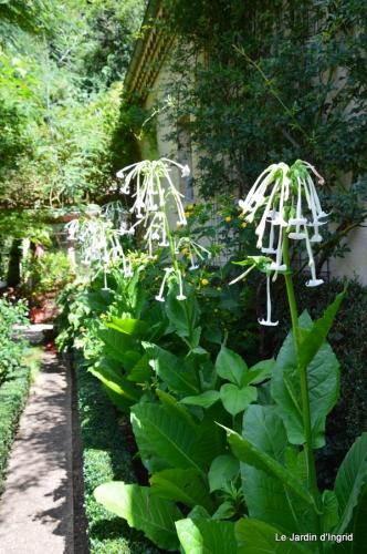 hibiscus,St Marcel,chez Brigitte,chats,jardin,Banes,papillons 129.JPG