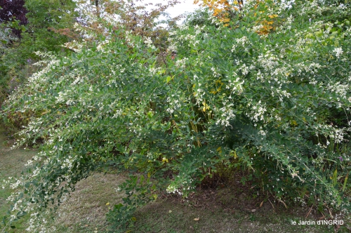 brocante st avit Se.jardin st Avt,récolte tomates 145.JPG