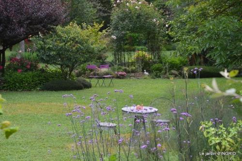mon jardin,dégats buis, 101.JPG