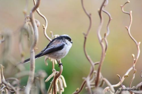 les lettres,les oiseaux,givre 088.JPG