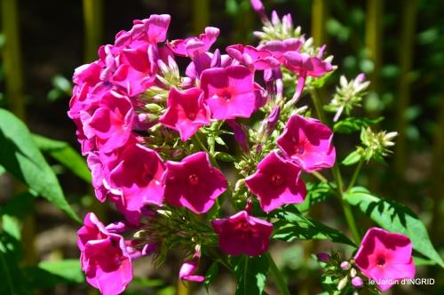 velos,pluie,belles vivaces,taille rosiers 077.JPG