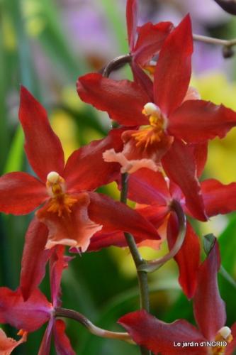 Orchidées,Noel jardiland,lever du soleil 018.JPG