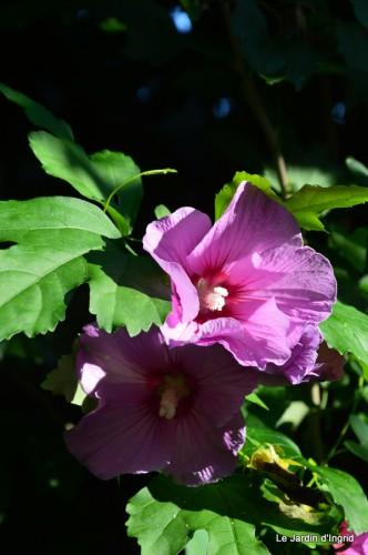 Lalinde passerelle,bouquet,jardin septembre 059.JPG