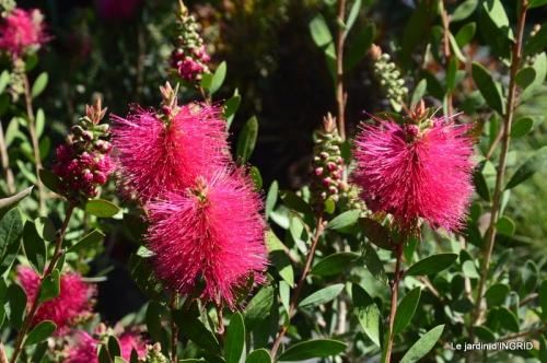 muguet,féte des fleurs Lalinde,jardin 099.JPG