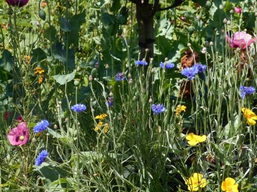 Normandie,jardin Monet,baie de Somme,chez Marylaur 188.JPG