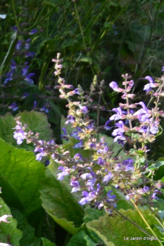 jachère,couleur,bouquet 017.JPG
