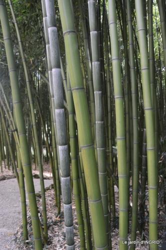 bambous Roque Gageac,jardin,bouquet 160.JPG