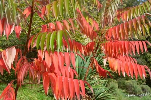 canal automne ,jardin,Ines 066.JPG