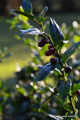 marché de Noel,décos extérieurs,couronnes,petits fruits 062.JPG