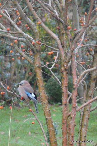 heron,oiseaux,givre, 012.JPG