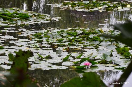 bouquet,jardin de Monet,les vaches,Pourville sur mer 097.JPG