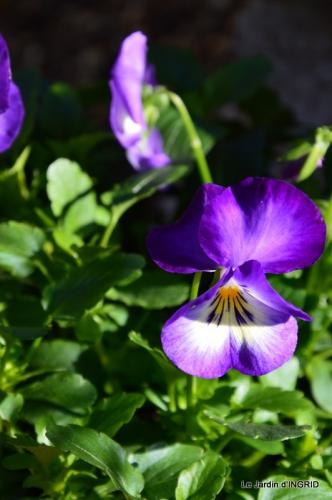 oiseaux,travaux,arbustes,les dernières fleurs 068.JPG