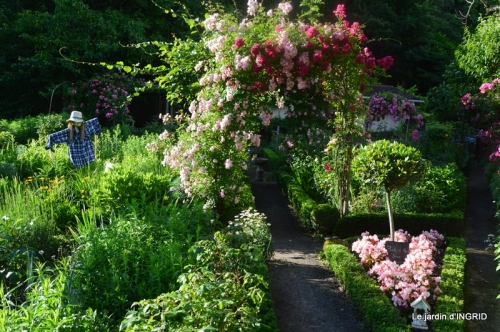 mon jardin,dégats buis, 096.JPG