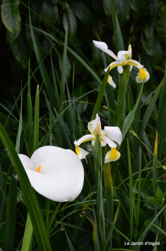 canal,fleurs blanches,marguerites,LE FLEIX,osier 074.JPG