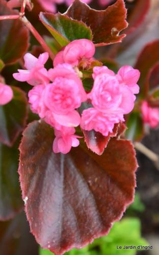 jardin,le cypres chauve,puces Mouleydier,vieilles photos 020.JPG