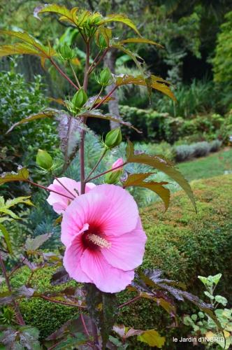 Ines,bouquet,hibiscus rose,cygnes,jardin 060.JPG