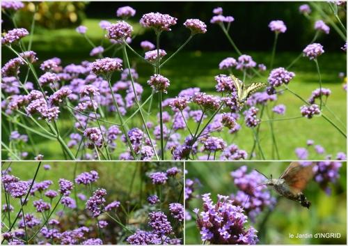 2016-07-11 jardin,papillons,Cadouin,légumes,Sophie,.jpg
