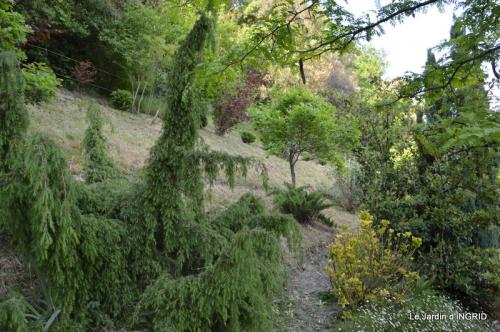 jardin,premières roses,colline,avant l'orage 011.JPG