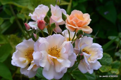 confiture,bouquet,petit jardin 041.JPG
