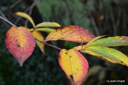 les tons roses,choux frisés,automne 080.JPG