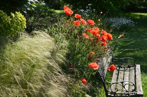 cygnes,Sophie,jardin en mai 046.JPG
