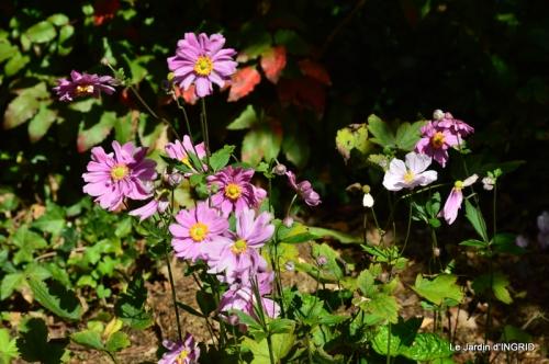 jardin pour l'automne,affiche vide jardin 087.JPG