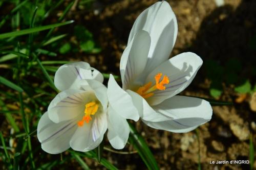 roseaux,narcisses,Nikky,semis,jardin 044-001.JPG