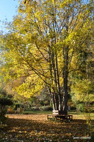 fin de l'automne,Lalinde,bouquet de l'avent 019.JPG