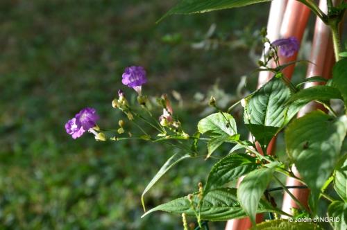 tour de jardin,bouquet,chez Bernadette, 048.JPG