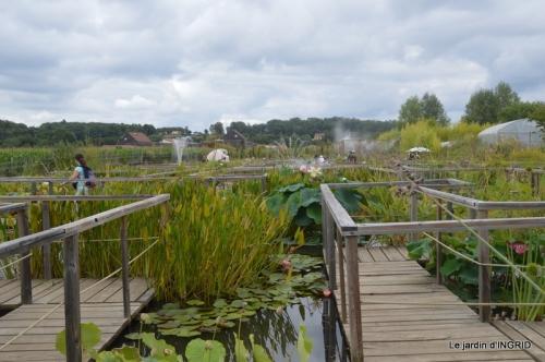 orage,puces,bouquet,Anniv.Ines,Brantome,Jardins d'eau 273.JPG