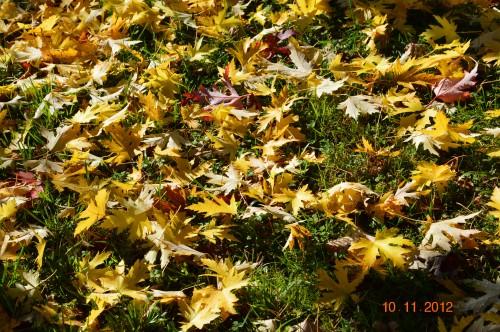 petit érable,le canal et lejardin àl'automne 040.JPG